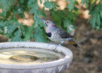 5-On-the-Big-birdbath-9-15-15