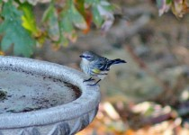 58-On-the-Big-birdbath-10-19-15