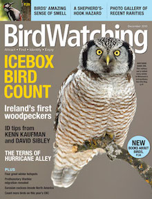 BirdWatching Magazine, December 2015, Northern Hawk Owl by Alan Murphy, Great Spotted Woodpecker (inset) by Dick Coombes.