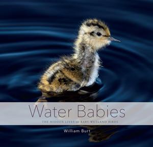 Water-Babies_300x289