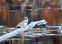 bestkingfisher
