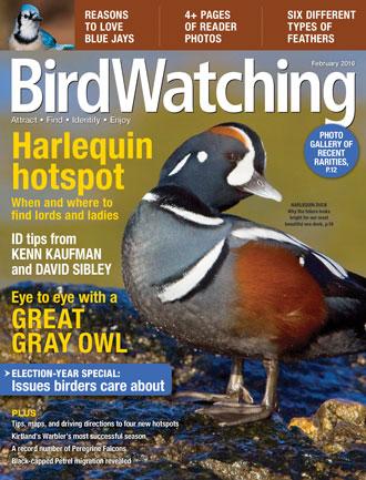 BirdWatching, February 2016