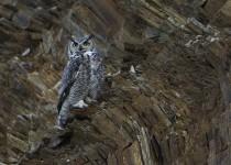 OWL-ROCKS_MG_0091
