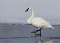 Portage_Lakes150131-7780-Edit