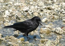 Northwestern-Crow-Barnet-Marine-Park