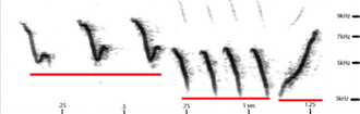 A SONG'S FINGERPRINT: A sonogram shows a sound's pitch and length and the relative loudness of its parts. The sonogram above makes the three-part structure of Yellow Warbler's song clear. A time scale, in seconds, appears on the bottom. The pitch or frequency scale is on the right.
