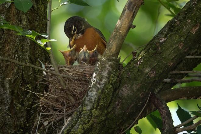 robin-nest-660