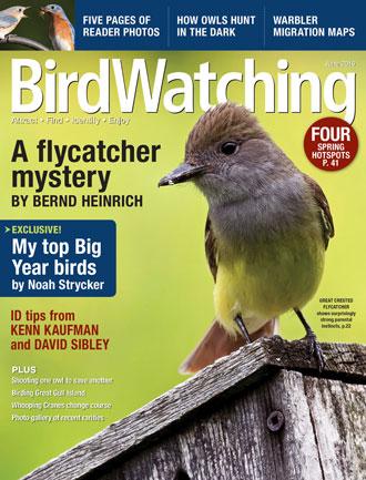 BirdWatching Magazine, June 2016, Cover, 330x433