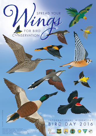 2016 International Migratory Bird Day poster. IMBD artwork by Lionel Worrell.