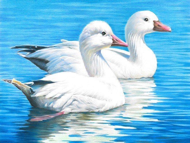 Ross's Geese, by Stacy Shen, of Fremont, California, winner of the 2016 national Junior Duck Stamp Art Contest. Courtesy U.S. Fish and Wildlife Service.