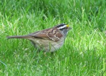Franklin-Sq-W.Th-Sparrow