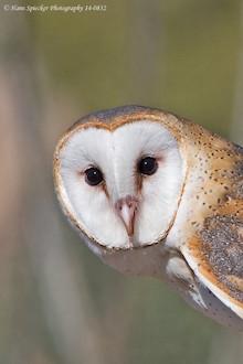 Behavior: How owls can hunt even in total darkness ...