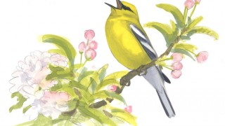 Blue-winged Warbler, singing, artwork by David Allen Sibley.