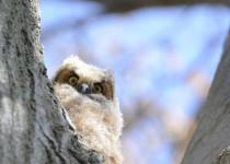 Owl1-small