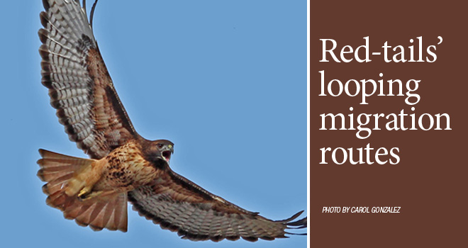 Red-tail-rotator