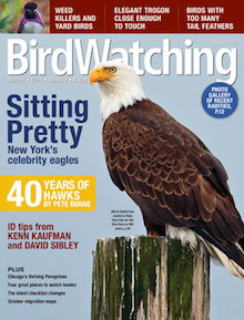 Bald Eagles made the cover of BirdWatching Magazine, October 2016.