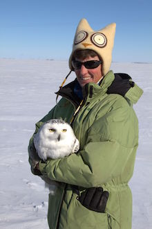 Researcher Karen Wiebe, of the University of Saskatchewan, with a Snowy Owl.