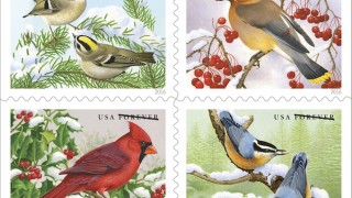 U.S. Postal Service Songbirds in Snow Forever stamps, featuring (clockwise from upper left) Golden-crowned Kinglets, Cedar Waxwing, Red-breasted Nuthatches, and Northern Cardinal.