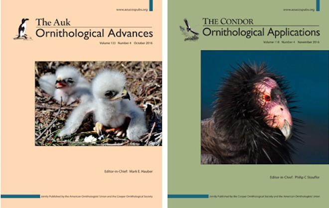 The Auk: Ornithological Advances, the journal of the AOU, and The Condor: Ornithological Applications, the journal of the Cooper Ornithological Society.
