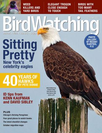 BirdWatching Magazine, October 2016, Bald Eagle by wildphoto3/Shutterstock, Costa's Hummingbird (inset) by Carol Warner.