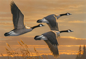 James Hautman, of Chaska, Minnesota, made bird news with this painting of Canada Geese.