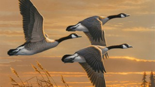 This painting of Canada Geese won the 2016 Federal Duck Stamp art contest.