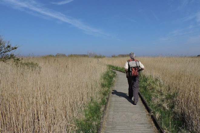 Ecotourist at Cley Marshes Nature Reserve, Norfolk, England.