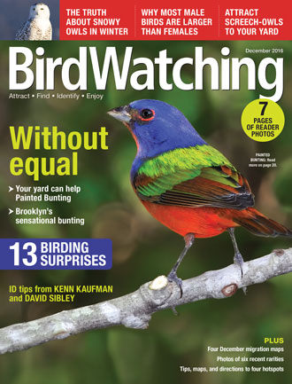 BirdWatching Magazine, December 2016, Painted Bunting By RJ Wiley, Snowy  Owl (inset