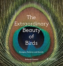 The Extraordinary Beauty of Birds: Designs, Patterns and Details, by Deborah Samuel, is one of our recommended bird books.
