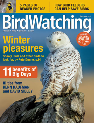 BirdWatching Magazine, January-February 2017.