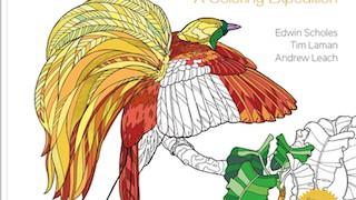 birds-of-paradise_320x200