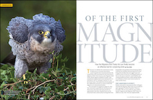 "Year in review 2016: ""Of the First Magnitude,"" by Terry Rich, BirdWatching Magazine, August 2016."