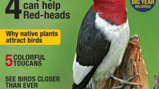 BirdWatching Magazine, April 2017. Red-headed Woodpecker by Robert McCaw