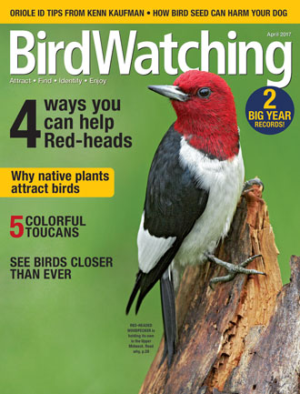 BirdWatching Magazine, April 2017. Red-headed Woodpecker by Robert McCaw