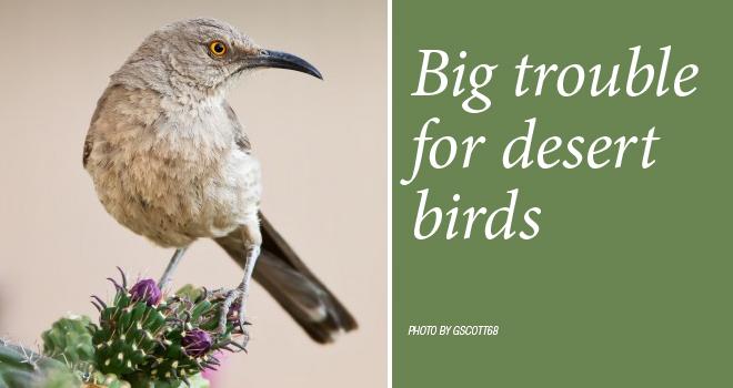 desert-birds-rotator