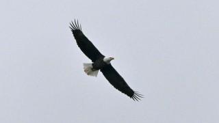 eagle1AB