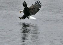 eagle3AB