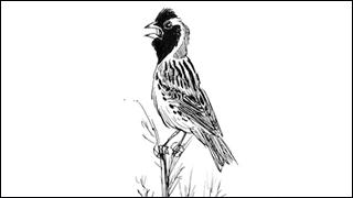 Good-Birders-Pieplow-320x180