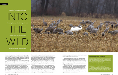Wisconsin's Necedah NWR, summer home of the Whooping Crane reintroduction project