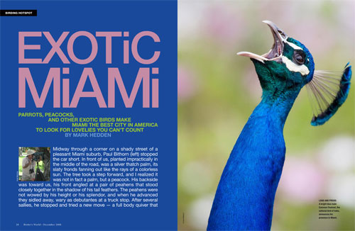 Where to find exotic birds in and around beautiful Miami, Florida