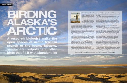 Birding Alaska's Arctic