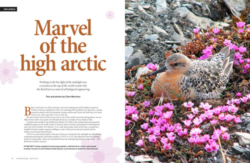 Marvel of the high arctic