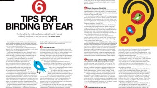 birding by ear tips