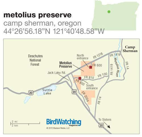 146. Metolius Preserve, Camp Sherman, Oregon