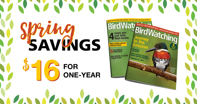 Get the latest information to help you find, attract, identify and better understand birds delivered right to your door.