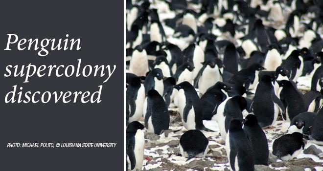 penguin-colony-rotator