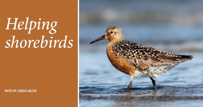 shorebirds-rotator