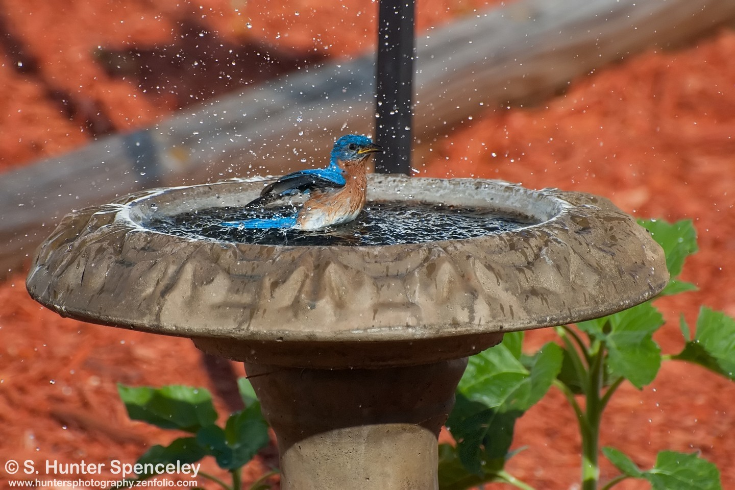 Julie Craves explains how to mosquito-proof your birdbath