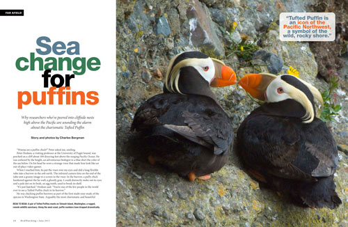 Sea change for puffins