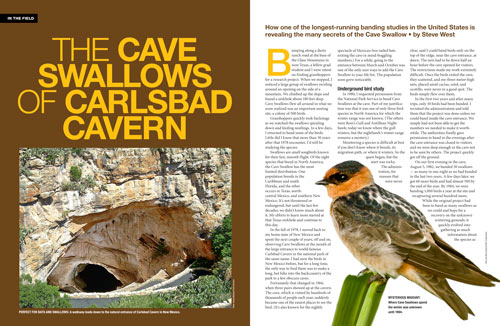 The Cave Swallows of Carlsbad Cavern